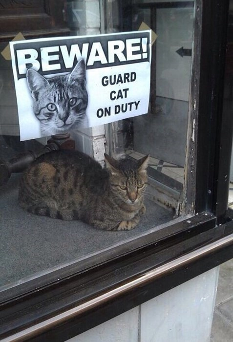 guard_cat_on_duty